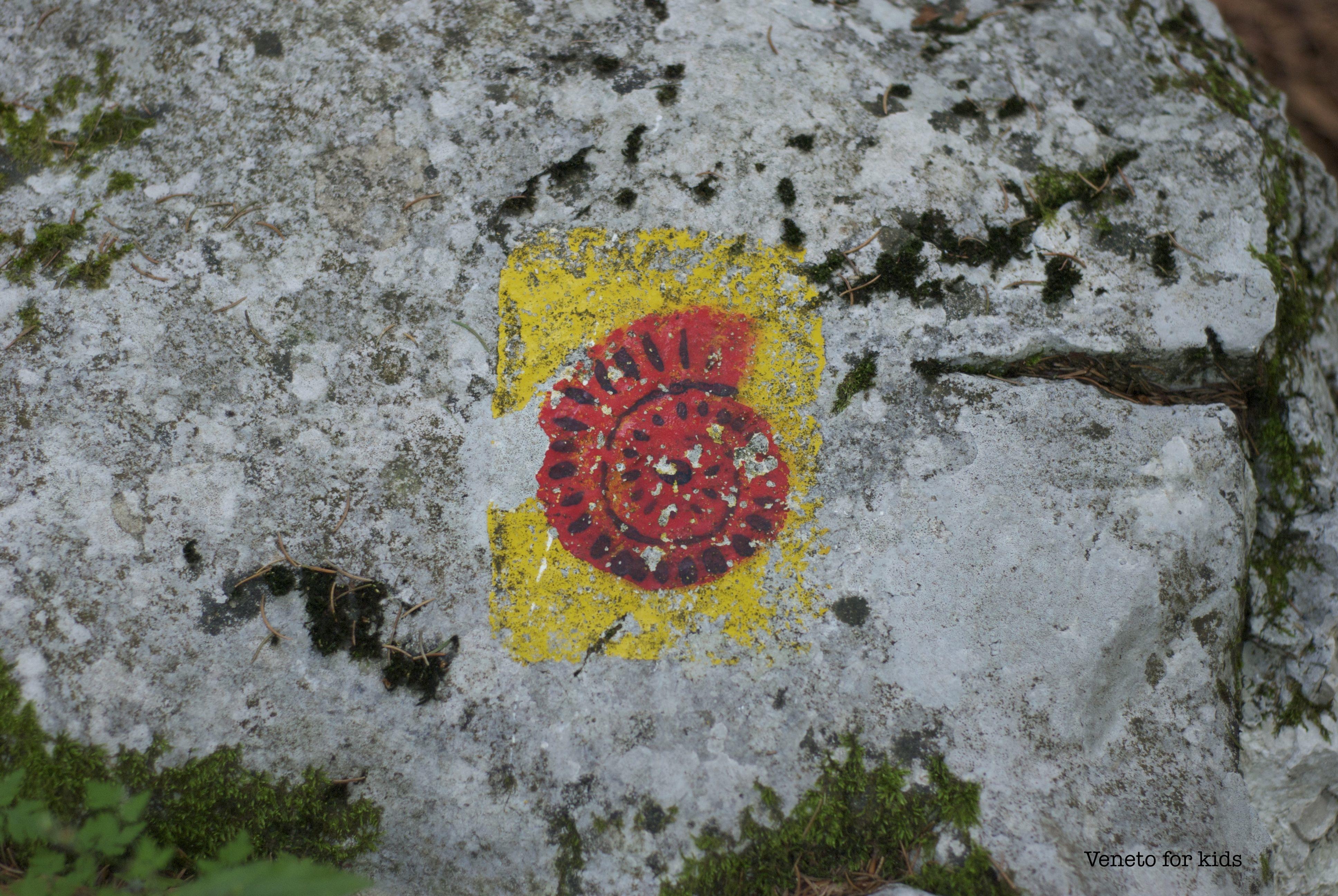 ammonite rosso