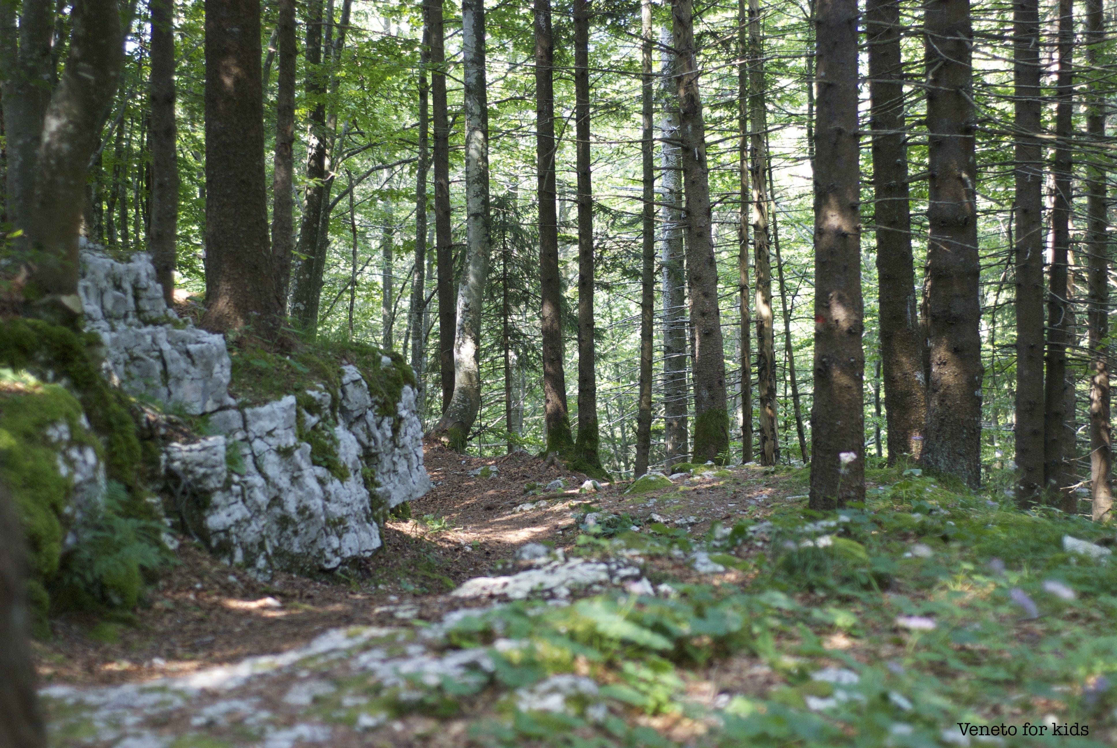 bosco monte corno