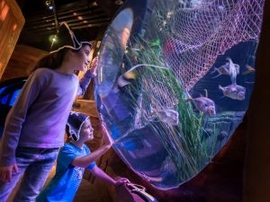 gardaland sea life carnevale