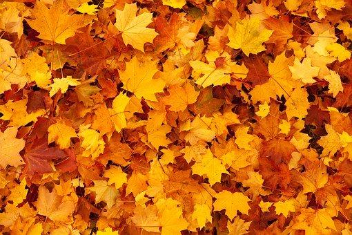 autunno in veneto